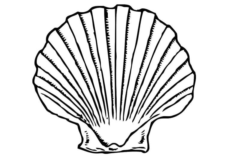 Malvorlage Muschel Ausmalbild 19619