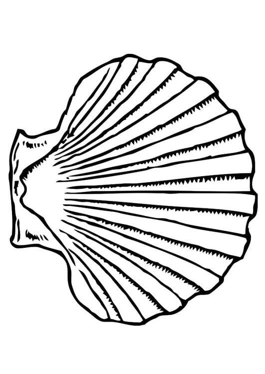 Muschel malvorlage  Malvorlage Muschel | Ausmalbild 19619.