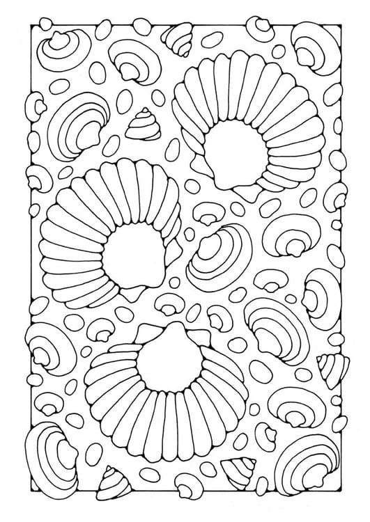 Muschel malvorlage  Malvorlage Muscheln | Ausmalbild 21910.