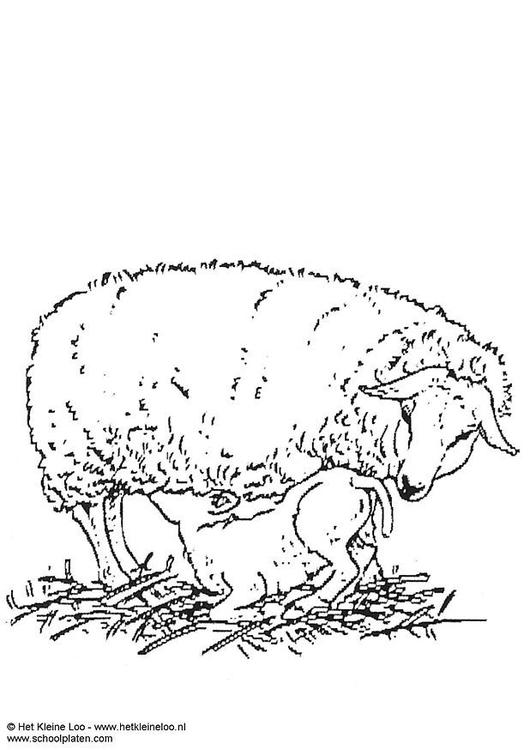 Malvorlage Mutterschaf mit Lamm | Ausmalbild 3737.