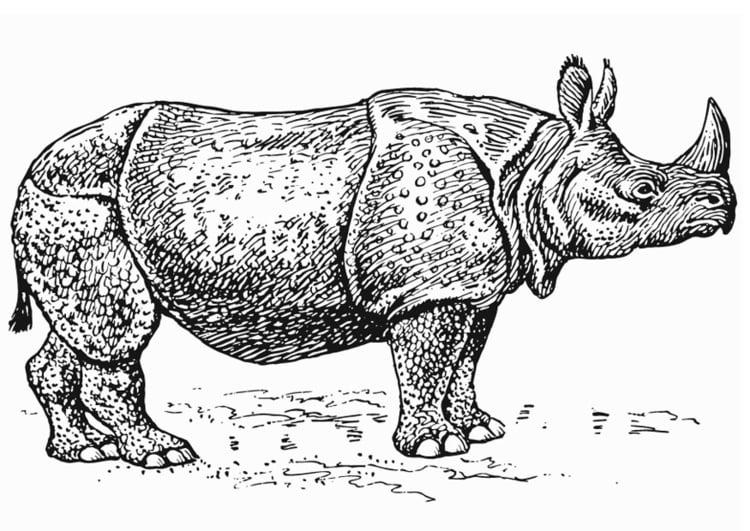Malvorlage Nashorn Ausmalbild 13226