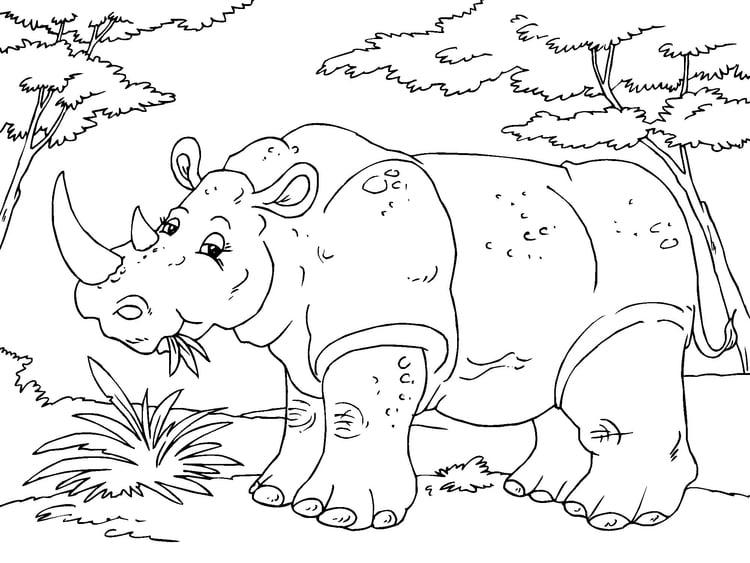 Malvorlage Nashorn Ausmalbild 23016