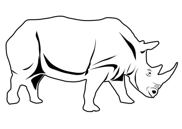 Malvorlage Nashorn Ausmalbild 27337