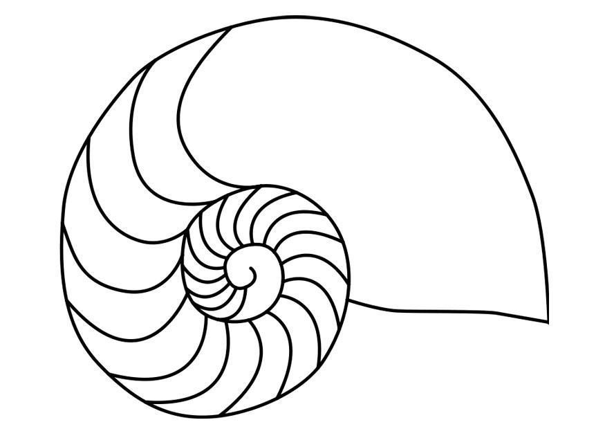 Malvorlage Nautilus Weichtier Tintenfisch | Ausmalbild 27187.