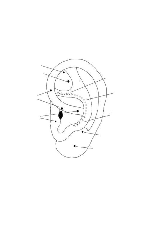 Malvorlage Ohr Ausmalbild 27602