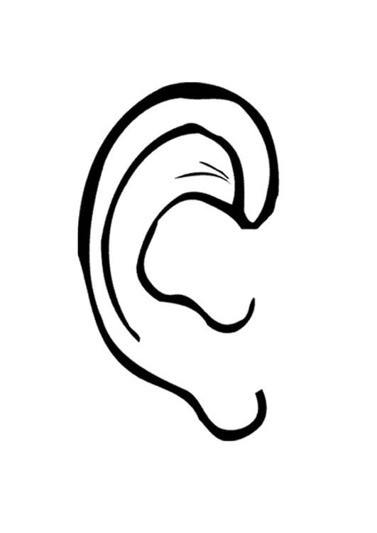 Malvorlage Ohr Kostenlose Ausmalbilder Zum Ausdrucken