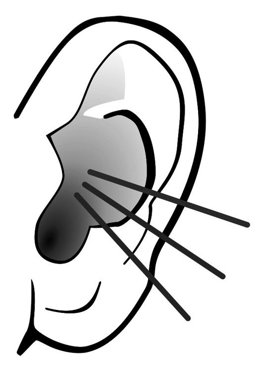 Malvorlage Ohr Geräusch Ausmalbild 29283