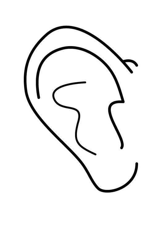 Ziemlich Malvorlage Des Menschlichen Ohrs Fotos ...