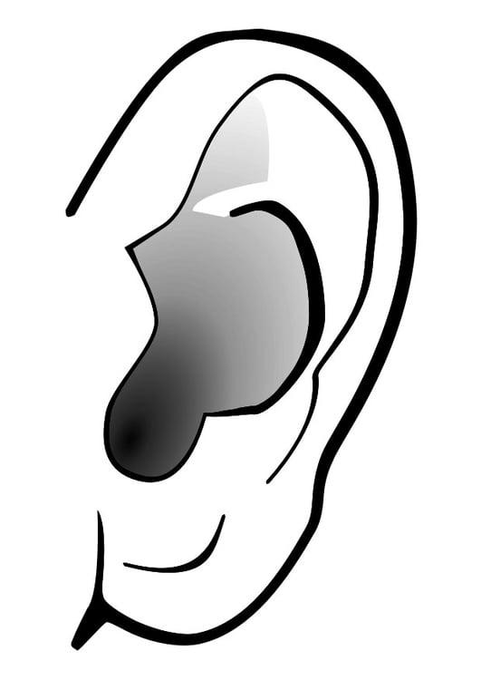 Malvorlage Ohr Stille Ausmalbild 29303
