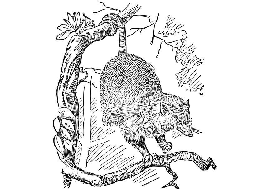 Malvorlage Opossum | Ausmalbild 28394.