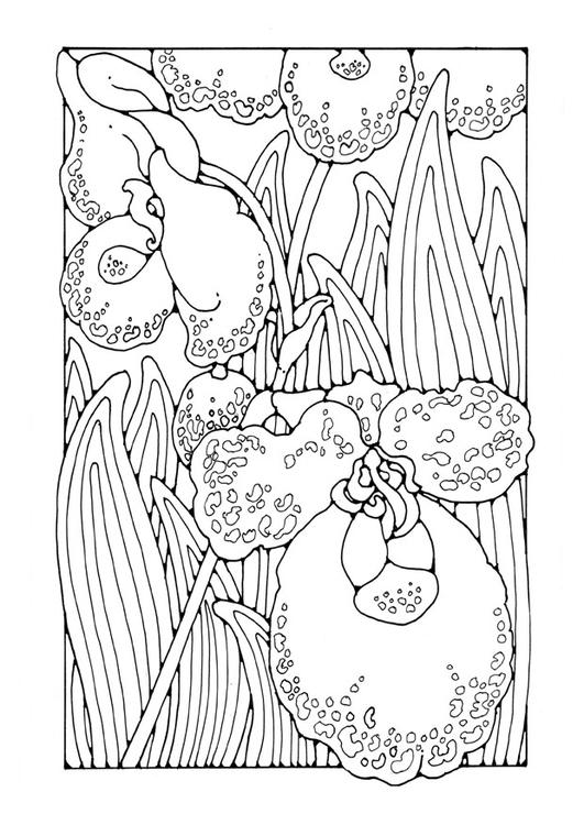 Malvorlage Orchidee | Ausmalbild 27752.