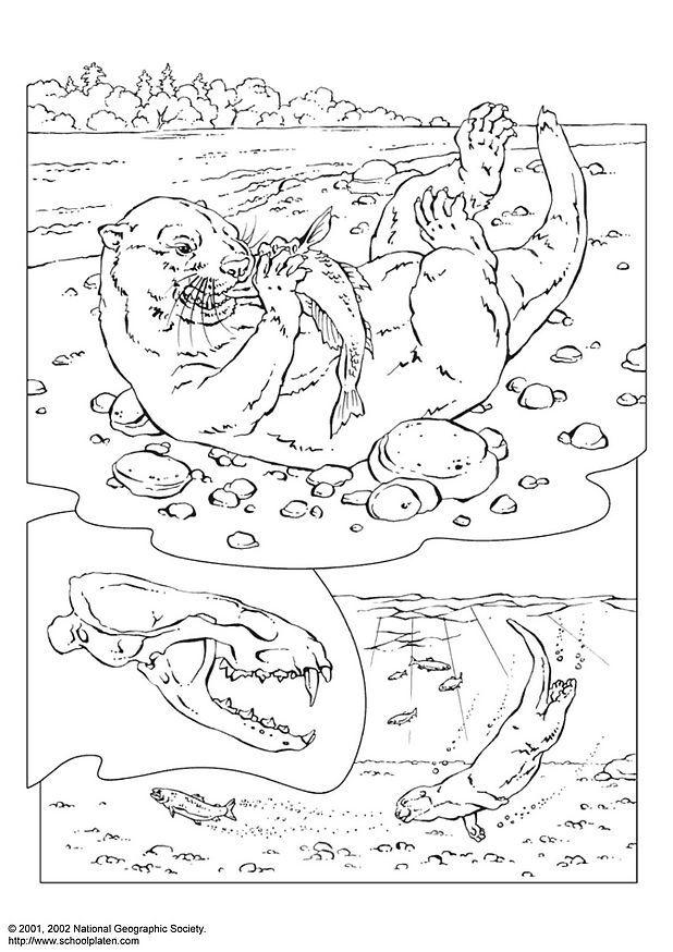 malvorlage otter  kostenlose ausmalbilder zum ausdrucken