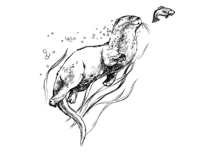 Otter Kleurplaat Malvorlage Otter Kostenlose Ausmalbilder Zum Ausdrucken