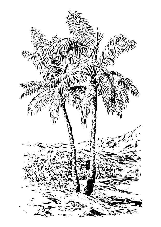 malvorlage palme  kostenlose ausmalbilder zum ausdrucken