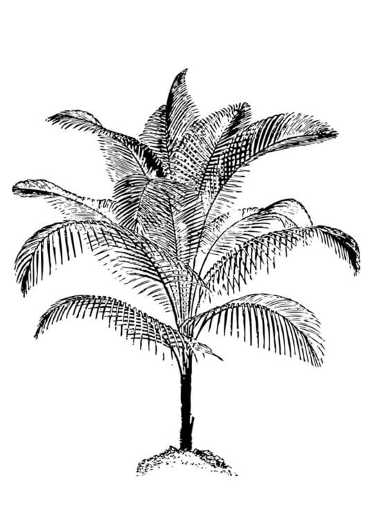 Malvorlage Palme   Ausmalbild 17401.