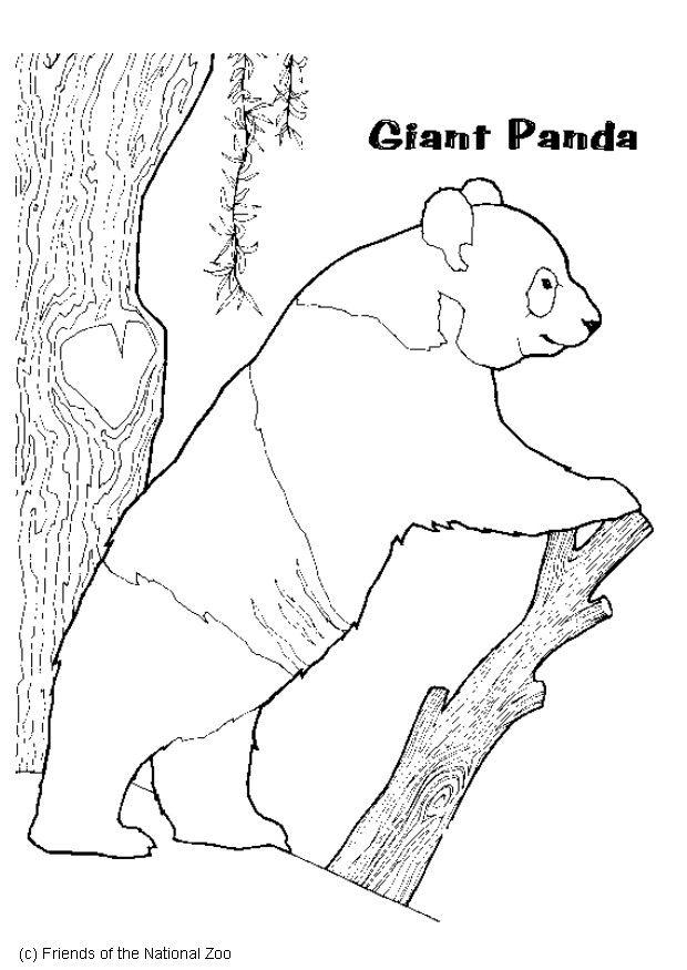 Malvorlage Panda Ausmalbild 5988