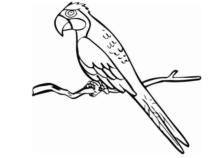 Malvorlage Papagei   Ausmalbild 12850.