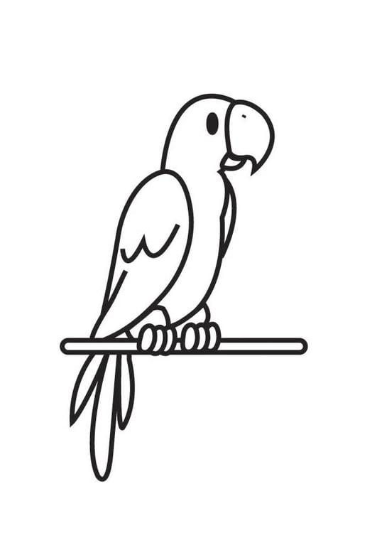 Malvorlage Papagei   Ausmalbild 17718.