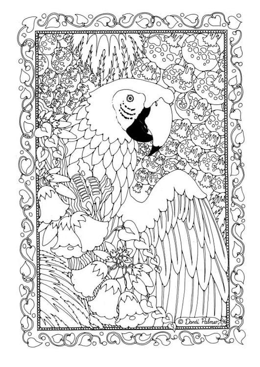 malvorlage papagei  kostenlose ausmalbilder zum ausdrucken