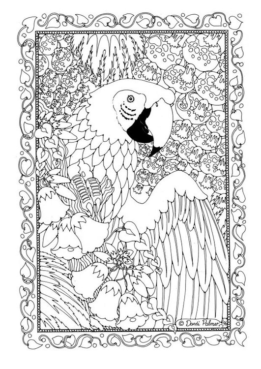 Malvorlage Papagei   Ausmalbild 19582.