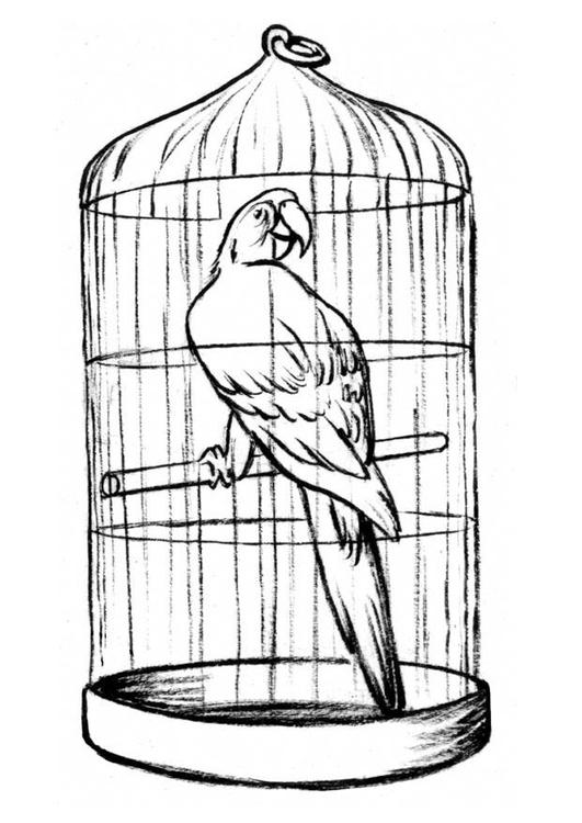 malvorlage papagei im käfig  kostenlose ausmalbilder zum
