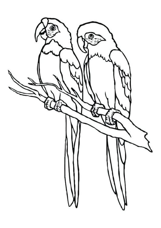 Malvorlage Papageien Ausmalbild 12536 Images