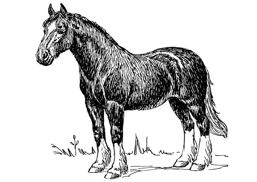 Paarden Kleurplaat Online Malvorlage Pferd Ausmalbild 16635 Images