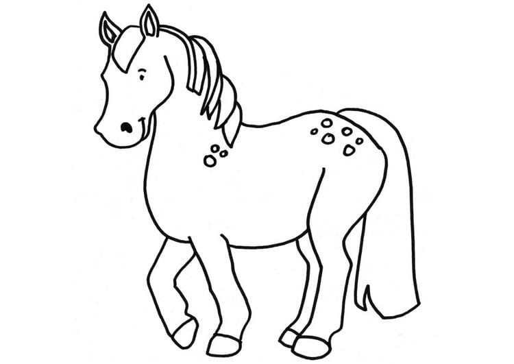 Malvorlage Pferd | Ausmalbild 18664.