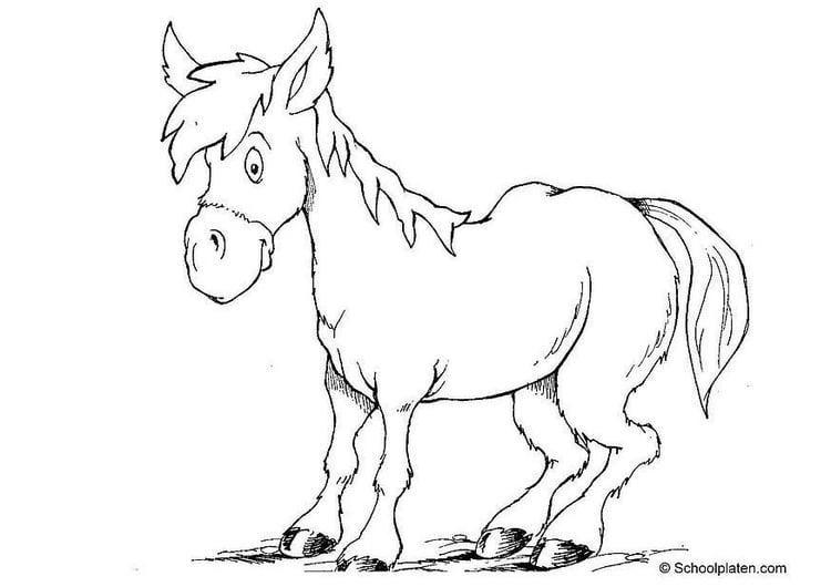 malvorlage pferd   ausmalbild 2879.