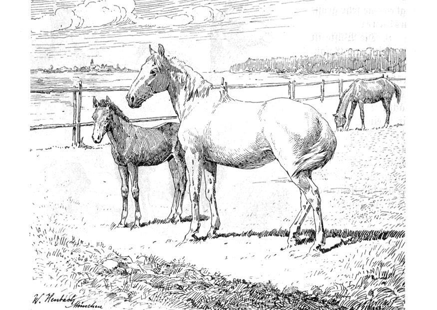 Malvorlage Pferd Mit Fohlen Kostenlose Ausmalbilder Zum Ausdrucken