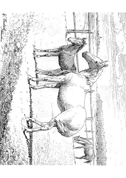 Paarden Kleurplaat Moeilijk Malvorlage Pferd Mit Fohlen Ausmalbild 9772