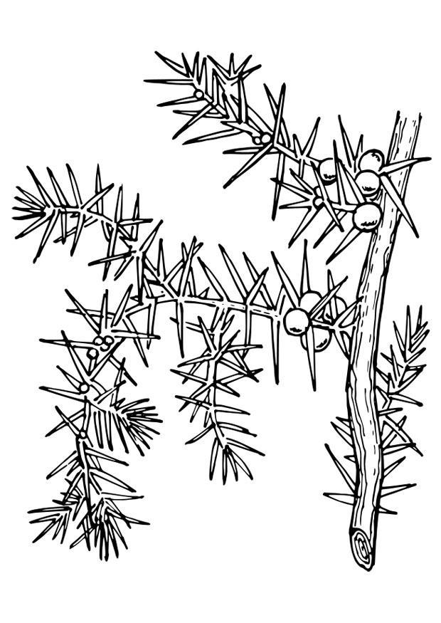 malvorlage pflanze  kostenlose ausmalbilder zum