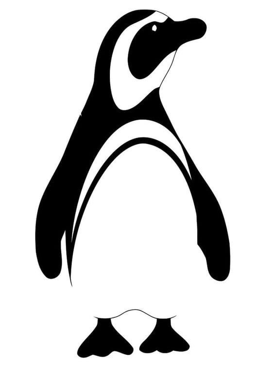 Malvorlage Pinguin Ausmalbild 19620