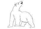 Malvorlage  Polarbär
