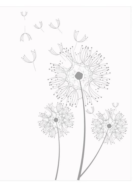 malvorlage pusteblume  coloring and malvorlagan