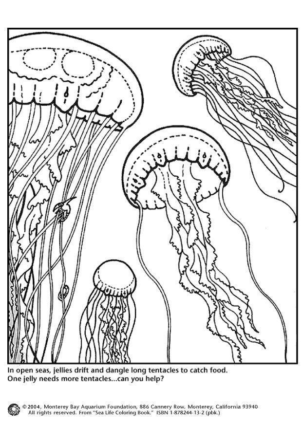 Fantastisch Monterey Bay Aquarium Malvorlagen Ideen - Druckbare ...