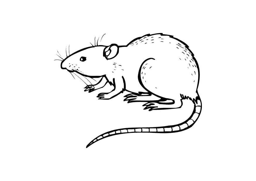 Gemütlich Anatomie Von Ratten Zeitgenössisch - Anatomie Von ...