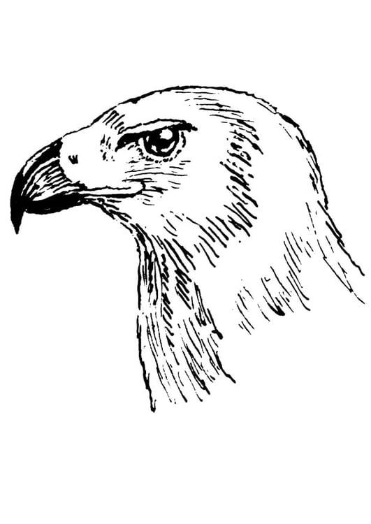 Uil Kleurplaten Printen Malvorlage Raubvogel Ausmalbild 18872 Images