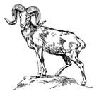 Malvorlage  Riesenwildschaf - Argali