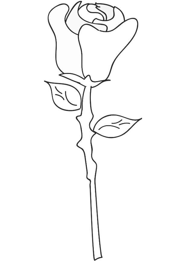 malvorlage rose  kostenlose ausmalbilder zum ausdrucken