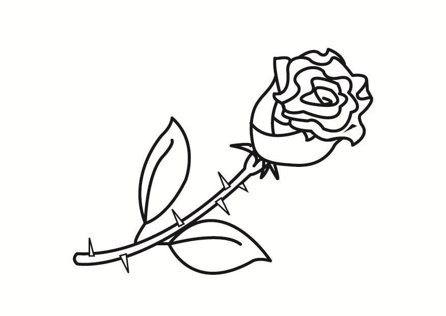 ausmalbilder blumen rosen
