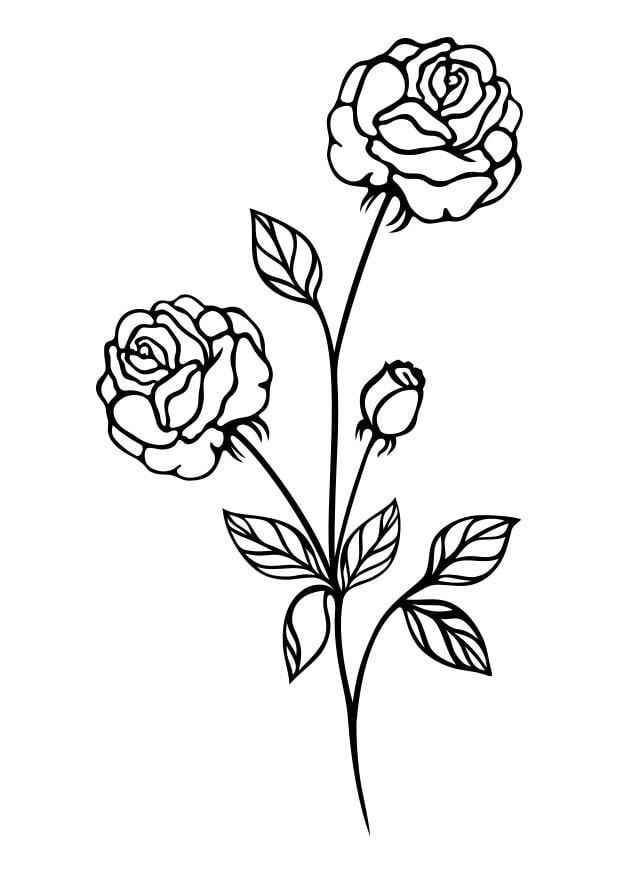 Malvorlage Rose | Ausmalbild 29722.