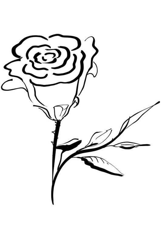 Malvorlage Rose Ausmalbild 21265