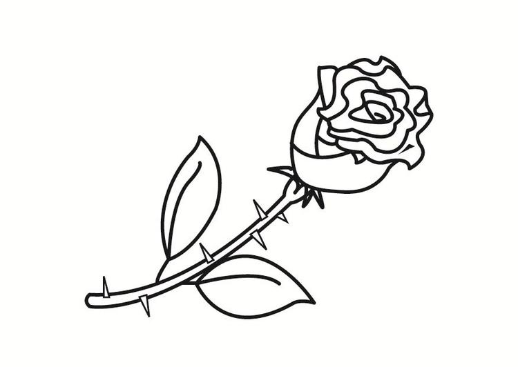 malvorlagen rosen kostenlos ausdrucken - ein bild zeichnen
