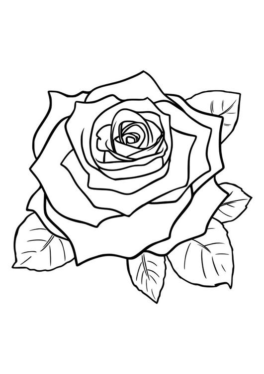 Malvorlage Rose Ausmalbild 29751