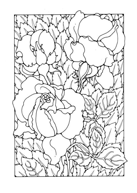 malvorlage rosen  kostenlose ausmalbilder zum ausdrucken