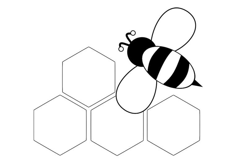 Malvorlage Rückansicht Biene   Ausmalbild 30002.