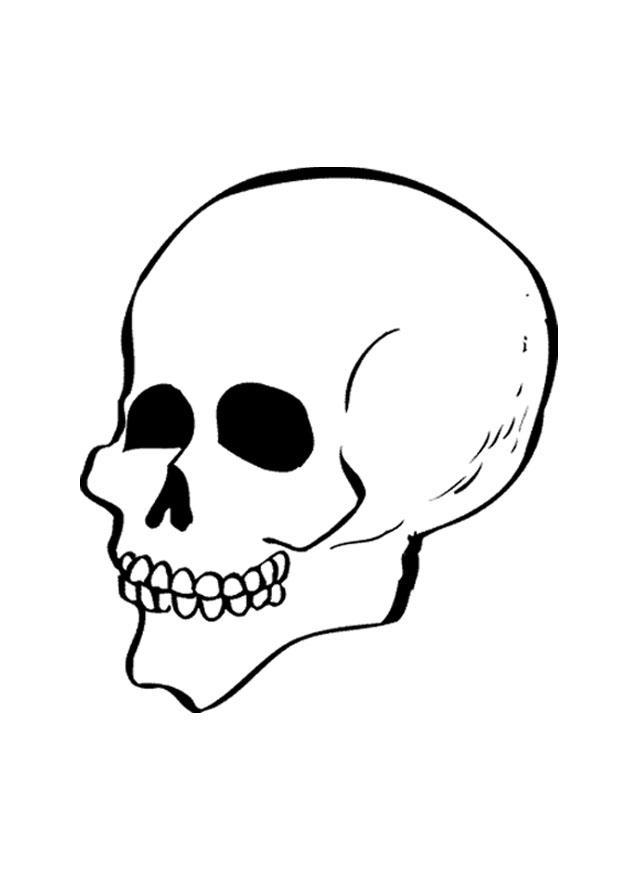 Nett Schädelknochen Anatomie Malvorlagen Zeitgenössisch - Anatomie ...