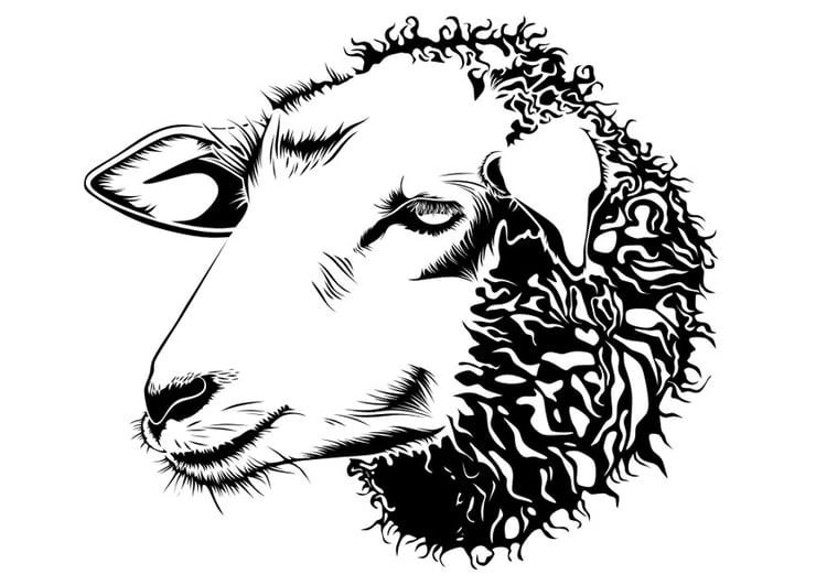 Malvorlage Schaf Kostenlose Ausmalbilder Zum Ausdrucken