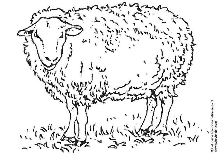 Malvorlage Schaf Kostenlose Ausmalbilder Zum Ausdrucken Bild 3741